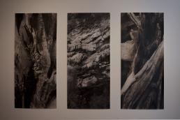 megalo-bonsaiprint-02
