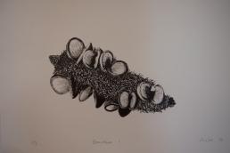 megalo-bonsaiprint-04