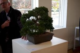 megalo-bonsaiprint-05