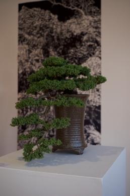 megalo-bonsaiprint-06