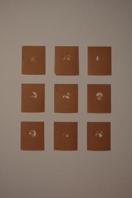 megalo-bonsaiprint-09