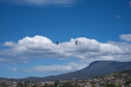 birds-mt-wellington