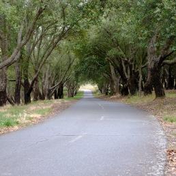 oaks-road